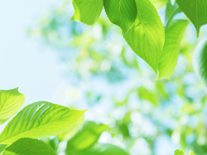 環境にやさしいクリーンエネルギーを安定供給